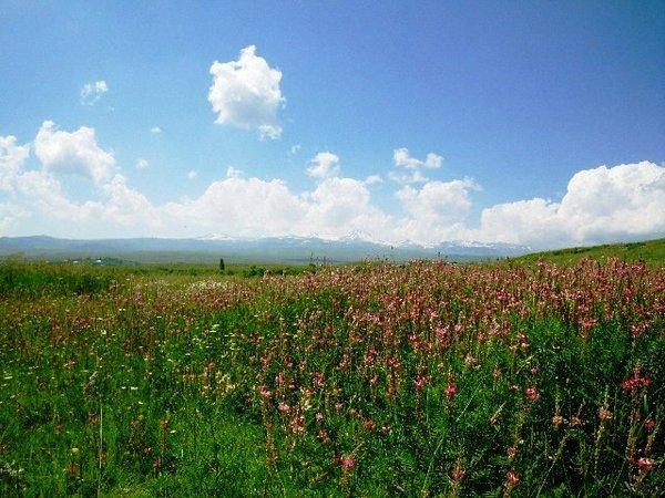 アラガツ山.jpg