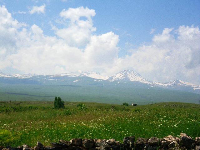 アラガツ山と花畑.jpg
